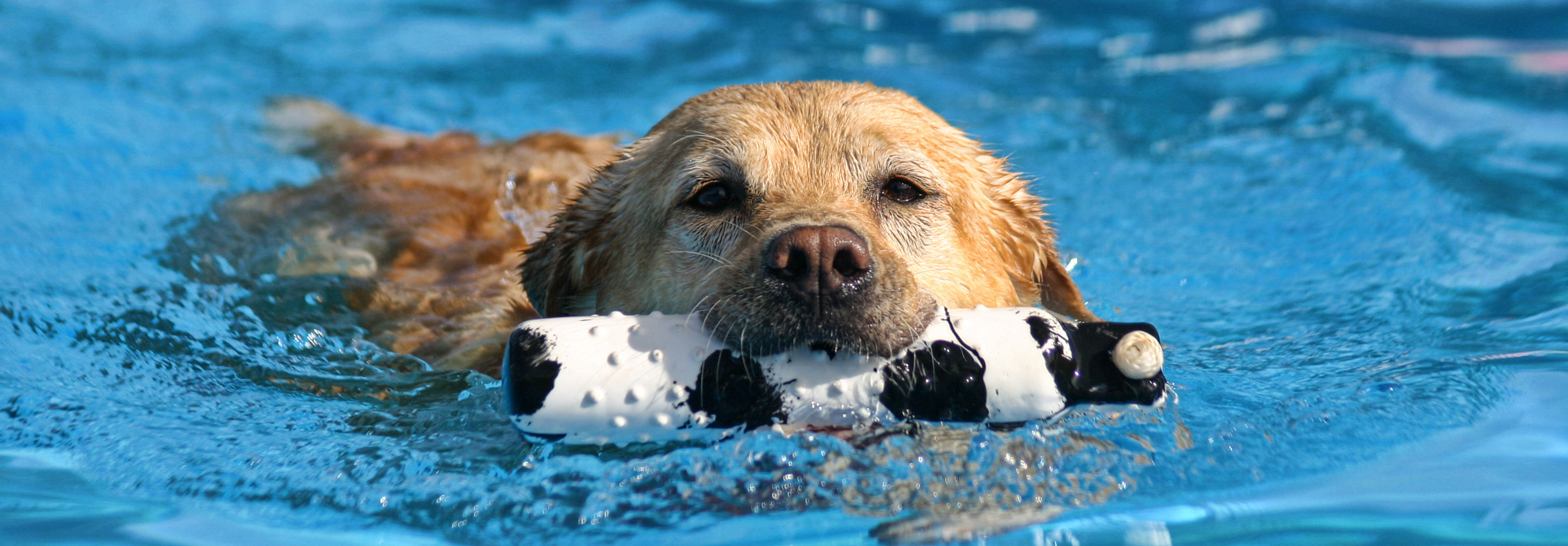 Doggy Paddle - Aquatic Center for Dogs